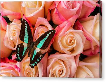 Pink Roses Blue Black Butterfly Canvas Print