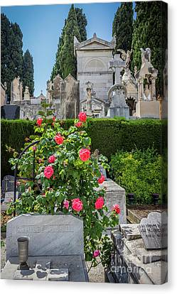 Rememberance Canvas Print - Roses In Castle Hill Cemetery In Nice, France by Liesl Walsh