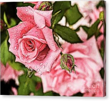 Pink Serenity Canvas Print