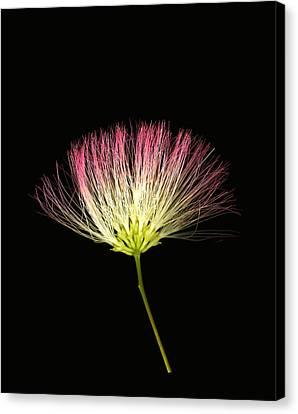 Pink Silk Canvas Print by Deborah J Humphries