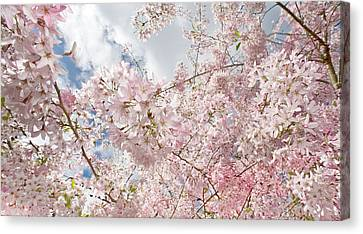 Pink Spring Canvas Print by Daniel Furon