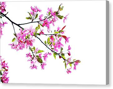 Pink Spring Canvas Print by Marilyn Hunt
