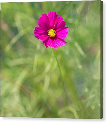 Pink Squared Canvas Print