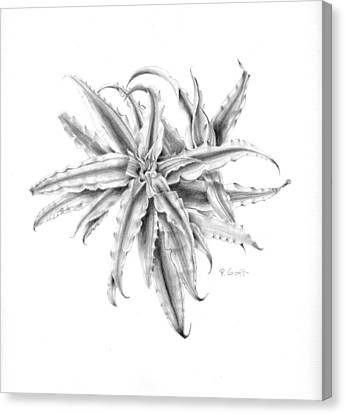 Pink Star In Gray Canvas Print