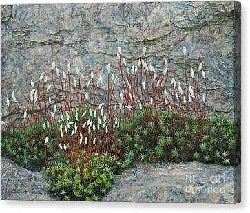 Pink Stony Creek Granite Still Life Study Canvas Print by Cindy Lee Longhini