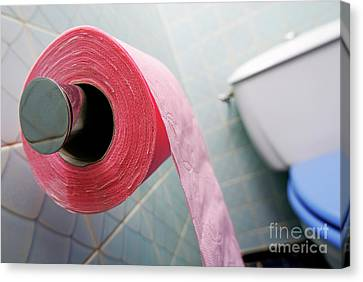 Domestic Bathroom Canvas Print - Pink Toilet Roll On Holder In Bathroom by Sami Sarkis