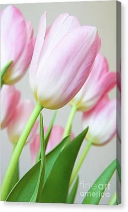 Pink Tulip Flowers Canvas Print by Julia Hiebaum