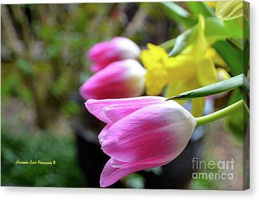 Pink Tulips Row Canvas Print