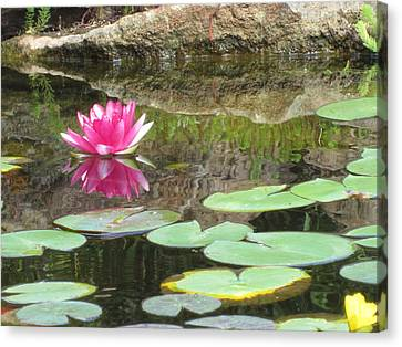 Pink Waterlilly  Canvas Print