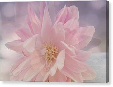 Pink Whisper Canvas Print by Bonnie Bruno