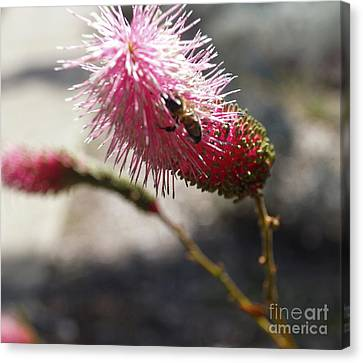 Pink Wildflower And Bee Canvas Print