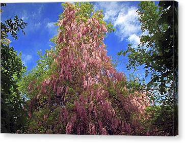 Canvas Print featuring the photograph Pink Wisteria by Donna Kennedy
