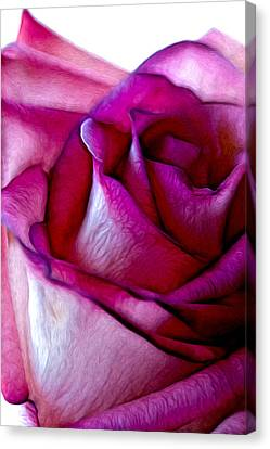 Pinked Rose Details Canvas Print by Bill Tiepelman