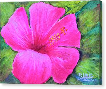 Pinkhawaii Hibiscus #505 Canvas Print by Donald k Hall