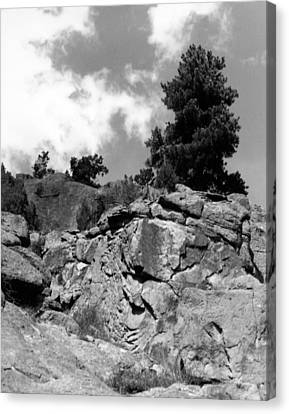 Pinnacle Pine Canvas Print by Allan McConnell