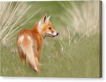 Pinocchio - The Long Nosed Fox Kit Canvas Print by Roeselien Raimond