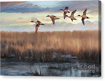 Pintail Fly By Canvas Print