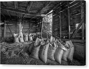 Benton Canvas Print - Pinto Beans by Debra and Dave Vanderlaan