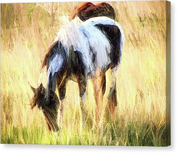 Pinto Grazing Canvas Print by Shannon Story