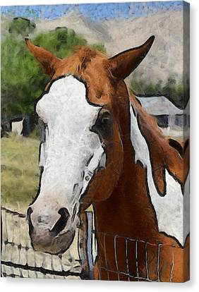 Canvas Print featuring the photograph Pinto In The Pasture Portrait  by Barbara Snyder