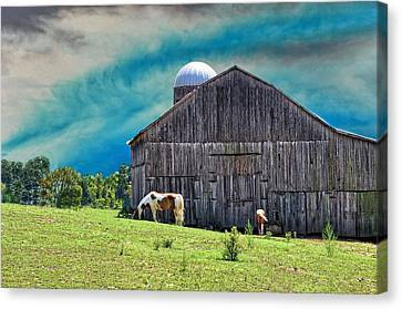 Pinto Summer Canvas Print by Jan Amiss Photography
