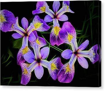 Pinwheel Purple Iris Glow Canvas Print by Penny Lisowski
