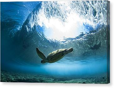 Transparency Canvas Print - Pipe Turtle Glide by Sean Davey