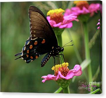 Canvas Print featuring the photograph Pipevine Swallowtail Butterfly by Donna Brown