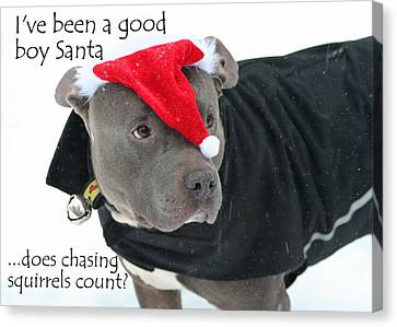 Pit Bull Christmas Two Canvas Print