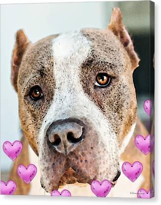 Pit Bull Dog - Pure Love Canvas Print