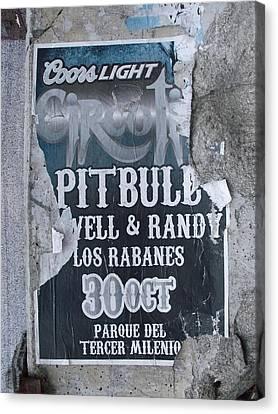 Pitbull Canvas Print by Anna Villarreal Garbis