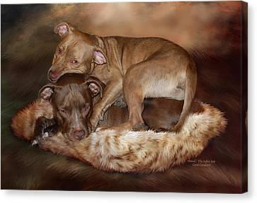 Pitbulls - The Softer Side Canvas Print by Carol Cavalaris