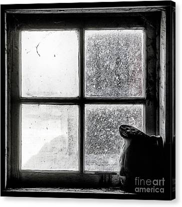 Pitcher In The Window Canvas Print