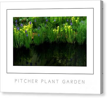 Pitcher Plant Garden Poster Canvas Print by Mike Nellums
