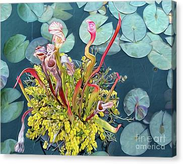 Pitcher Plants And Lily Pads By Kaye Menner Canvas Print by Kaye Menner