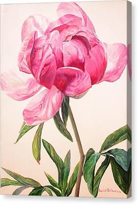 Pivoine 1 Canvas Print by Muriel Dolemieux