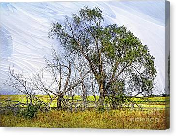 Plains Tree Canvas Print