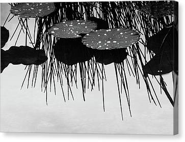 Plant Abstract Canvas Print by Carolyn Dalessandro