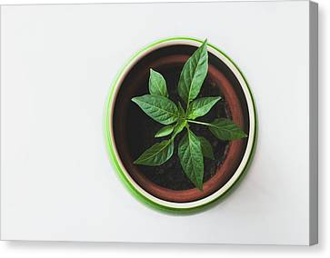 House Plants Canvas Print - Plant by Happy Home Artistry