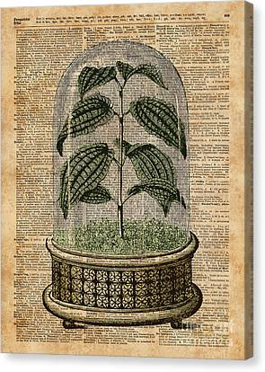 Plant Under Bell-glass Vintage Illustration Over A Old Dictionary Page  Canvas Print by Jacob Kuch