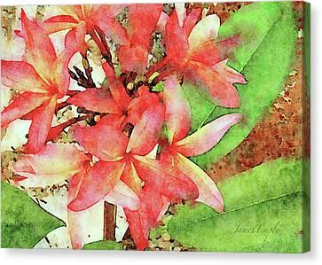 Canvas Print - Plantation Plumeria Digital Watercolor by James Temple
