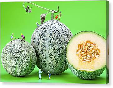 Canvas Print featuring the photograph Planting Cantaloupe Melons Little People On Food by Paul Ge