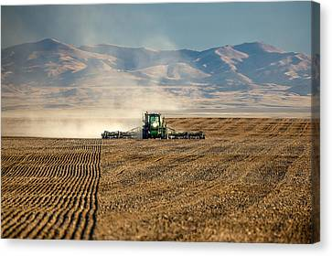 Planting Orangic Wheat Canvas Print