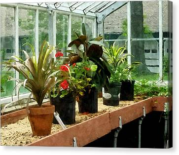 Plants In Greenhouse Canvas Print by Susan Savad
