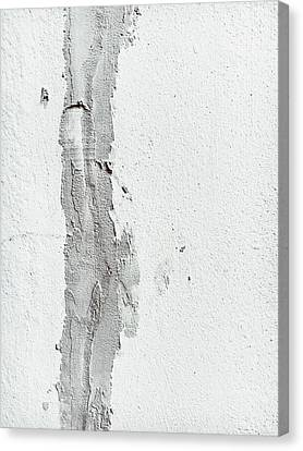 Plaster On A Wall Canvas Print by Tom Gowanlock