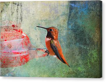 Plate 048 - Hummingbird Grunge Series Canvas Print