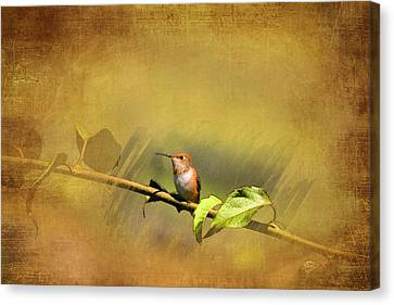 Plate 112 - Hummingbird Grunge Series Canvas Print