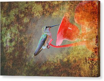 Plate 153 - Hummingbird Grunge Series Canvas Print