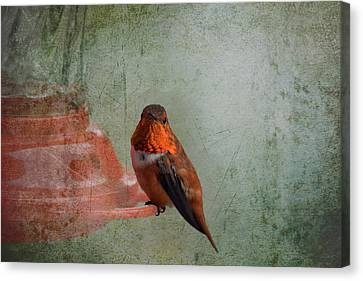 Plate 164 - Hummingbird Grunge Series Canvas Print