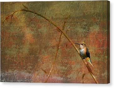 Plate 225 - Hummingbird Grunge Series Canvas Print
